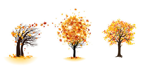 Wall Mural - Fall trees set