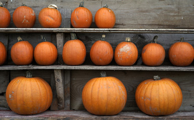 Mix of pumpkins for sale at a farm