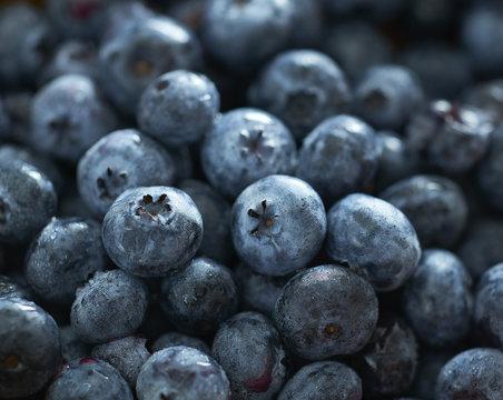 Blueberries in Closeup