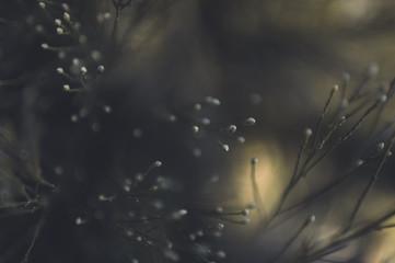 Artistic close up of desert shrubs