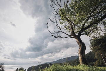 Tree in landscape of mountains