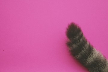 tail cat on pink background. Wall mural