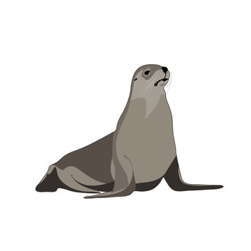 seal animal. vector image