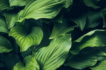 большие зеленые листья , клумба с цветком в парке, натуральный фон