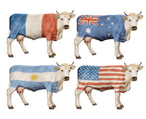 vache- drapeau- France- Australie- USA- Argentine- lait- viande- illustration- photo- élevage