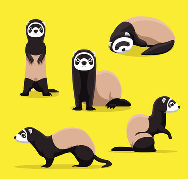 Cute Ferret Poses Cartoon Vector Illustration