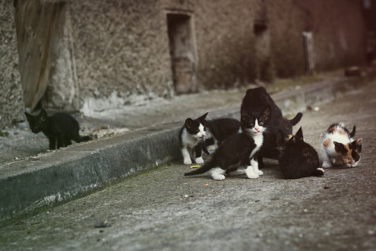 Stray kittens family on the street, with their mom