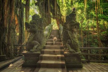Sacred Monkey Forest Sanctuary in Ubud. Bali Island Indonesia