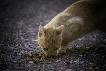 Street cats eating
