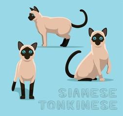 Cat Siamese Tonkinese Cartoon Vector Illustration