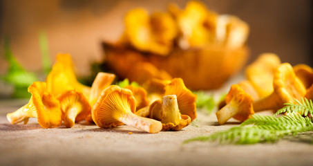 Raw wild chanterelle mushrooms on old rustic table background. Organic fresh chanterelles background. Soft focus