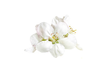 Floral wallpaper, white spring flowers blossom