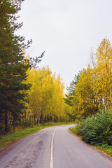 Asphalted road with autumn forest. Vertical composition