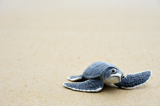 Little turtle on the beach,Copy space.