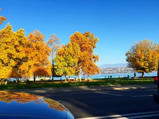 Autumn trees and blue sky, beautiful landscape. Copy space,