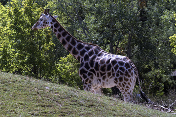 protected animals kept in a safari park
