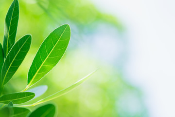Closeup nature view of green leaf on blurred greenery background with copy space using as background concept