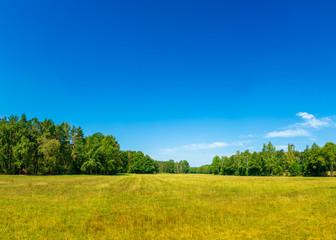 Landschaft mit Wiese und Waldrand