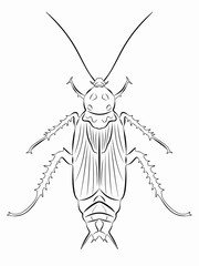 illustration of cockroach , vector draw