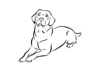 Labrador vector illustration. Black and white outline of a lie down dog isolated on a white background.