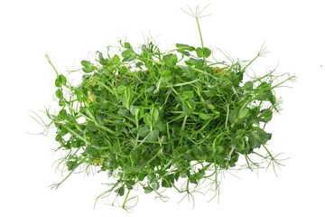 Fresh pea shoots on white background. isolated.