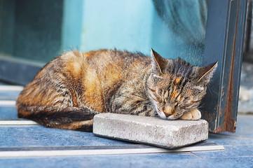 A cat sleeping on the street.