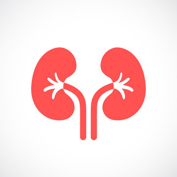 Kidneys vector icon