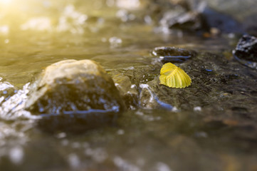 The fallen-down autumn leaf  in a forest stream, in  rays of the evening sun