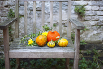 Autumn nature. Fall fruit on wood. Thanksgiving. autumn vegetables on an old chair in the garden,