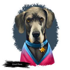 Great Dane, Deutsche Dogge, German Mastiff dog digital art illustration isolated on white background. Germany origin working, guardian dog. Pet hand drawn portrait. Graphic clip art design