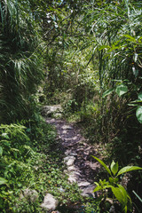 Overgrown forest pathway leading to a waterfall on the famous Road of Waterfalls in Baños, Ecuador