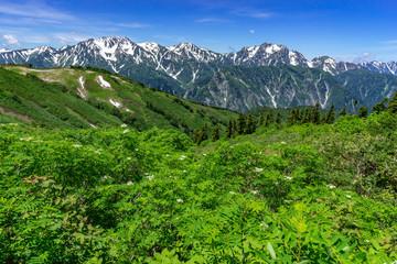 爺ヶ岳から望む立山連峰とナナカマド