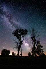 Sillouette trees with milky way