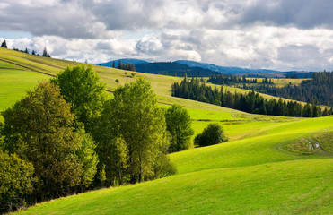 beautiful mountainous countryside. grassy rolling hills with trees. mountain ridge in the distance. wonderful early autumn weather