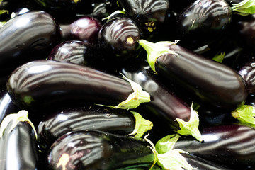 ripe  aubergines in the market