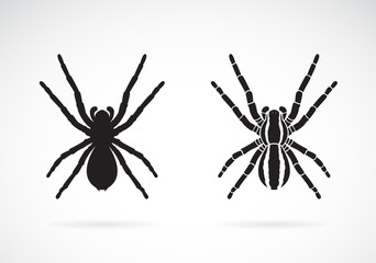 Vector of spider on white background. Insect. Animal. Easy editable layered vector illustration.