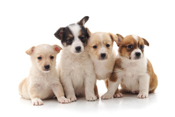 Group little puppies.