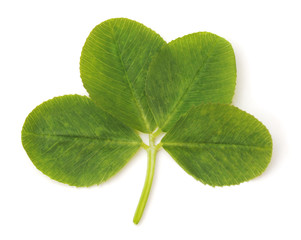 Leaf green clover.