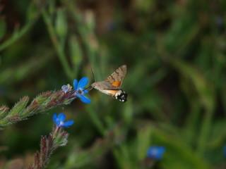 mariposa libando de flor azul