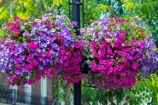 Street post with baskets of natural flowers (petunias)