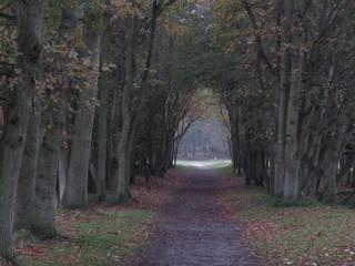 autumn in nature