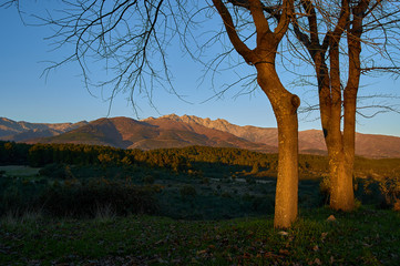 Trees and mountains at sunset. Landscape of Castilla in Spain