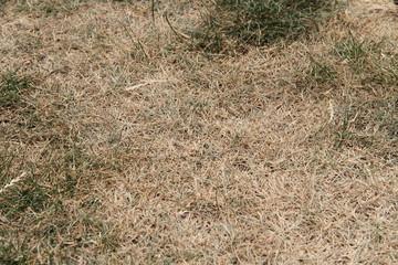 ausgetrockneter Rasen 3