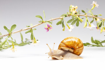 snail crawling around a beautiful flowering branch