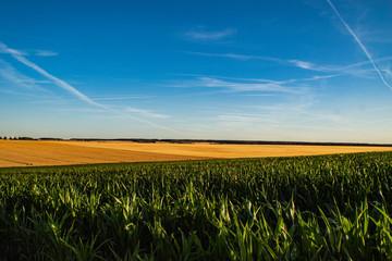 Kornfelder in Thüringen