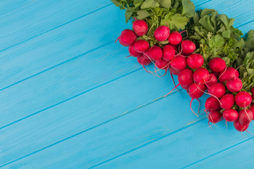 Many bunches of radish. Blue wood background. Free space for text, copy space.