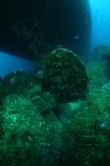 Wrecked propeller sunk undersea.