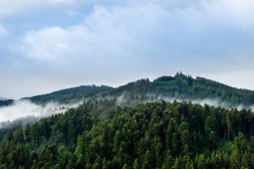 Germany, Mystic black forest nature landscape
