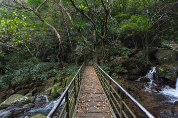 Pedestrian Bridge crossing a river, dense forest in northern Taiwan. Asia adventure, lush green forest and trees with river flowing below the bridge. Parallel converging lines, Hiking adventure