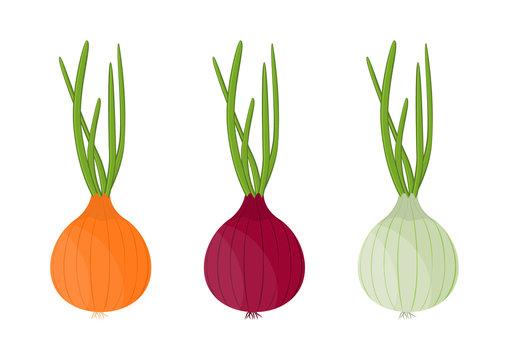 Vector illustration. Set onions on white background.